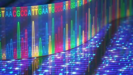 BRF sanger sequencing ABI3730 BigDye